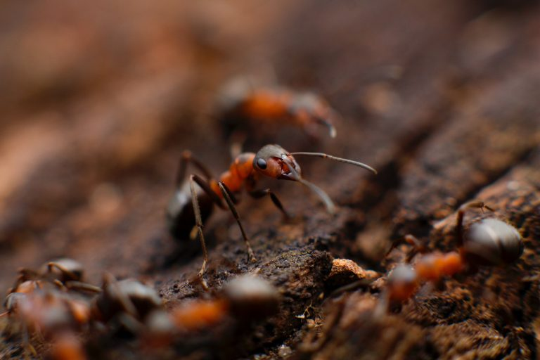 Pest Control - close up of ants