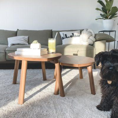 Carpet flea treatment - dog on carpet